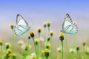 La farfalletta 나비